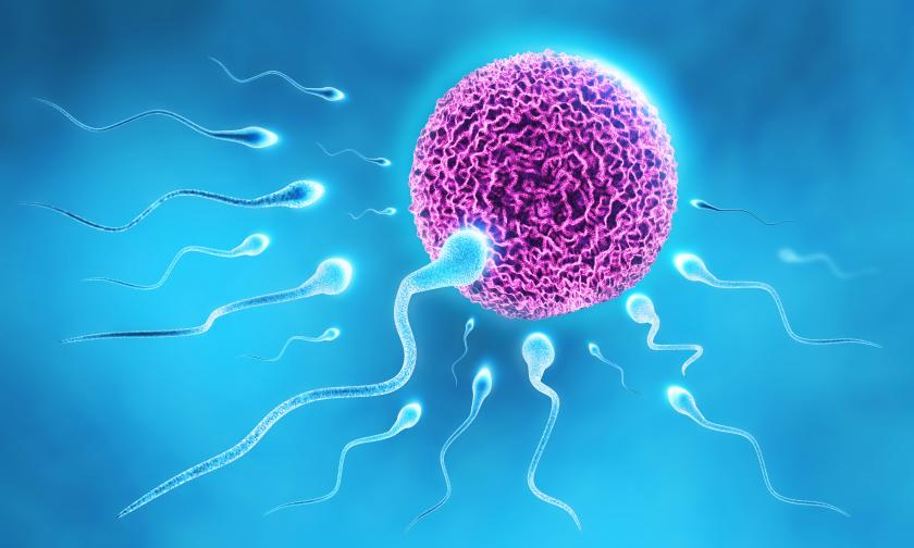 sperm-best-sperm